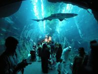 5 Most Amazing Aquariums Around The World