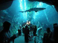 5 Most Amazing Aquariums Around The World
