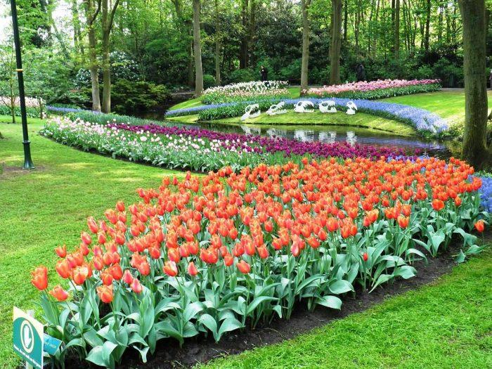 Keukenhof Garden