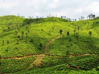 Take A Visit To The Beautiful Town Of Valparai