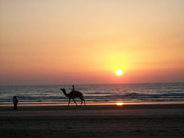 Camel Ride At Diveagar Beach