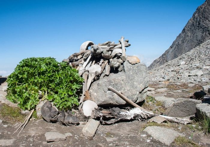 Human Skeletons In Roopkund Lake