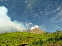 World's Highest Organic Tea Estate