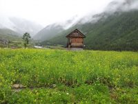 Wooden Hut In Chitkul