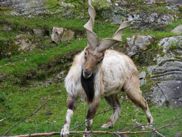 Weird Animals With Horns 10
