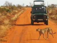 World's Best 5 Safari Wildlife Destinations