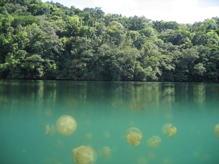 Jellyfish Lake Palau