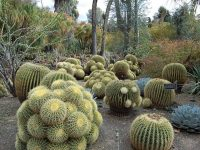 Top 5 Most Mysterious Desert Plants In The World