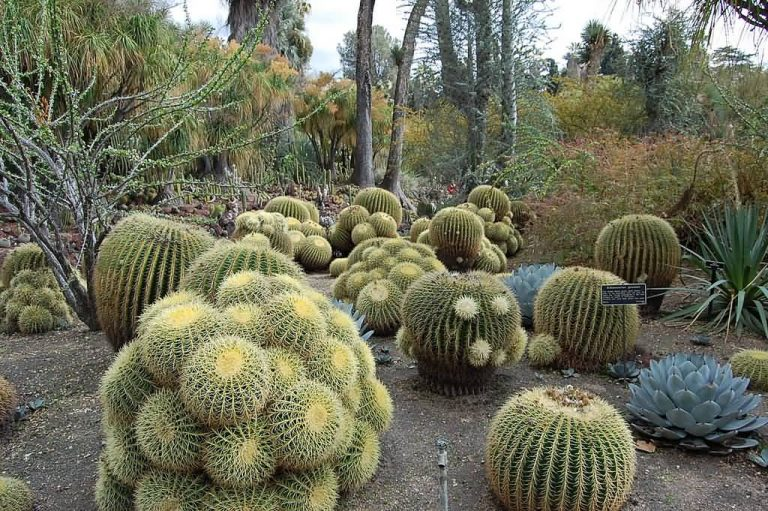 Top 5 Most Mysterious Desert Plants In The World Allrefer
