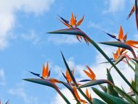 World's Weirdest Flower Bird of Paradise