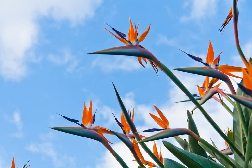 Worlds Weirdest Flower Bird Of Paradise