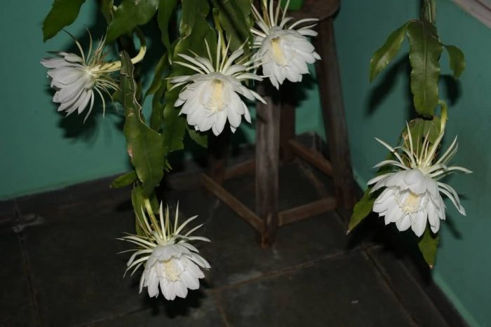 5 Lovely Flowers Which Bloom Only At Night Allrefer