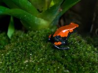 Know About The World's Most Deadliest Amphibian