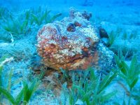 Do You Know About The Most Venomous Fish In The World?