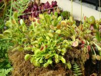 The Mysterious Venus Flytrap That Kills And Digests Its Prey