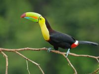 10 Most Beautiful Birds Having Very Weird Beaks