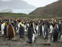10 Most Amazing Flightless Birds In The World