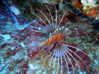 Top 5 Most Poisonous and Venomous Fishes In The World