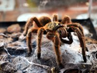 7 Most Venomous & Dangerous Spiders