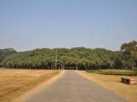 Top 7 Strange And Unique Trees