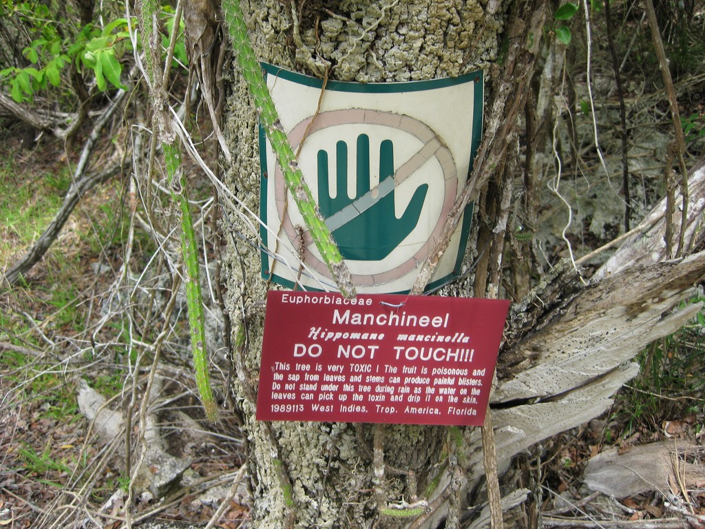 Manchineel_Tree_Warning