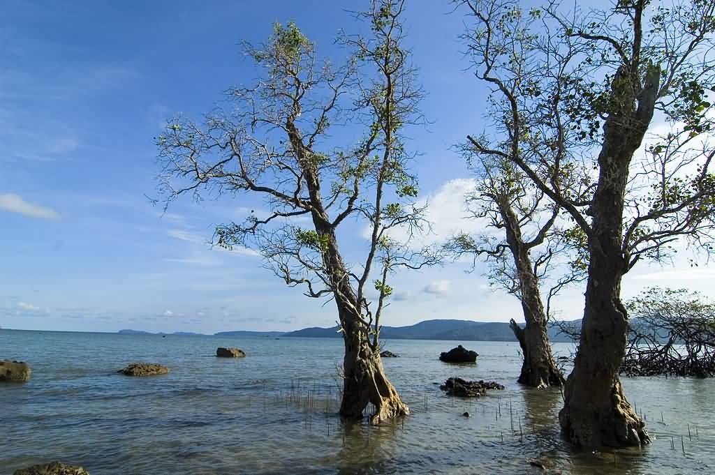 Seas And Trees Of Andamans