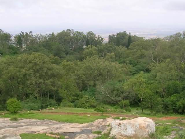 Nandi Forest Patch