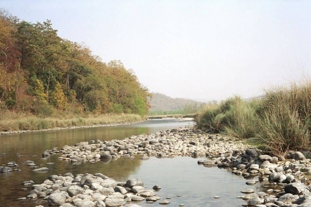 River In Corbett National Park
