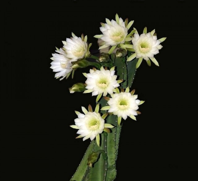5 beautiful night blooming flowers allrefer - Flowers that bloom only at night ...