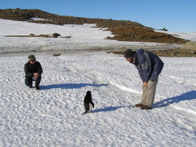 Penguin With Man In Antarctica