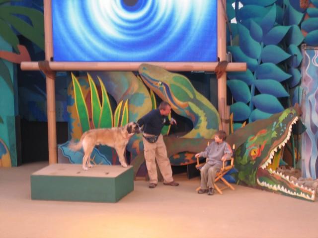 Animal Planet Live