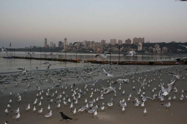 Seagull Mumbai
