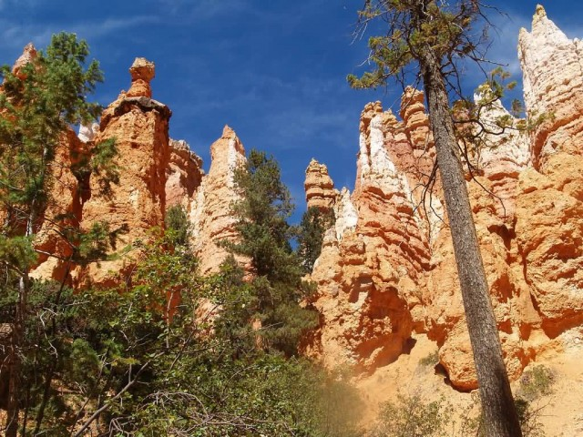 Looking Up At The Hoodoos In Bryce Canyon National Park