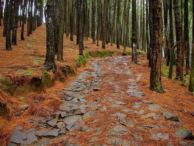 Vagamon Pine Forests
