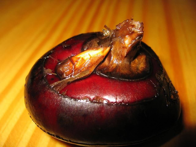 Water Chestnut Corm