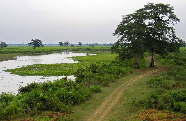 Flooded Grasslands In The Kaziranga National Park