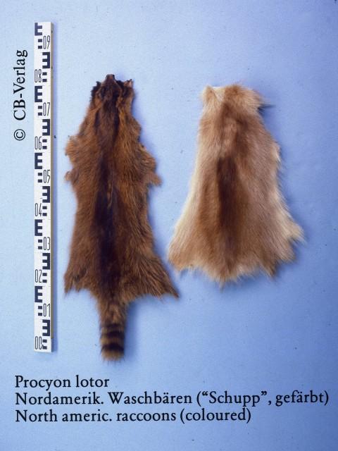 Racoon Fur Skin